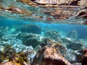 Guided Snorkel Pic5